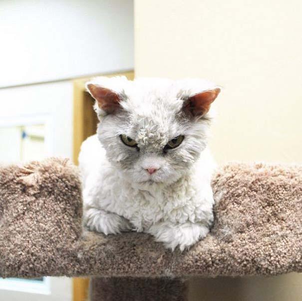 Albert, ο γάτος που μοιάζει να θέλει να δολοφονήσει τους πάντες (14)