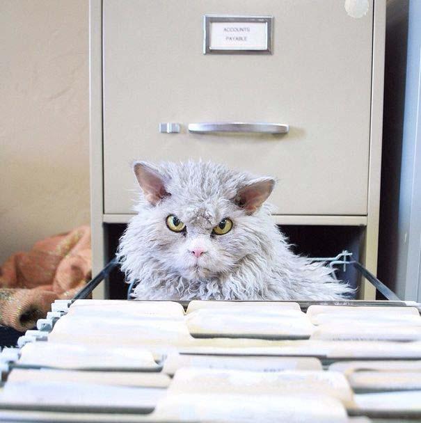 Albert, ο γάτος που μοιάζει να θέλει να δολοφονήσει τους πάντες (15)