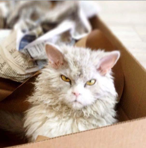 Albert, ο γάτος που μοιάζει να θέλει να δολοφονήσει τους πάντες (16)
