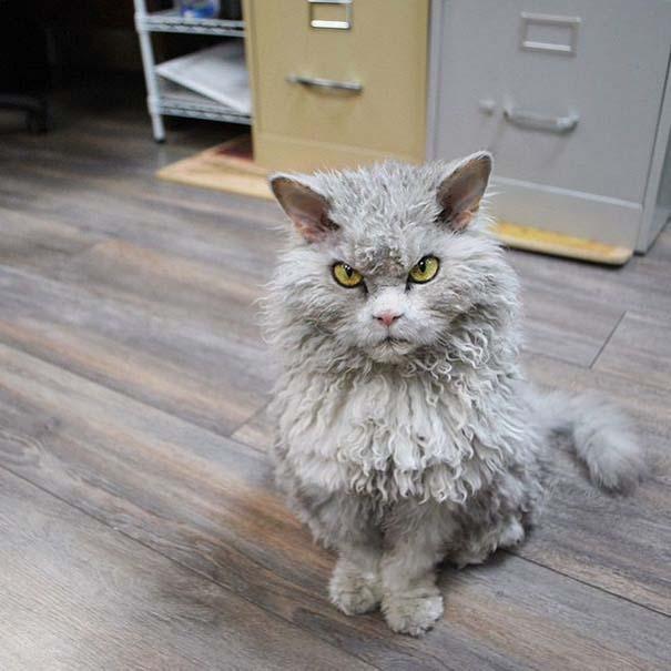 Albert, ο γάτος που μοιάζει να θέλει να δολοφονήσει τους πάντες (18)
