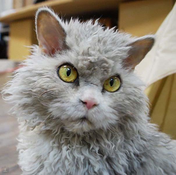 Albert, ο γάτος που μοιάζει να θέλει να δολοφονήσει τους πάντες (19)