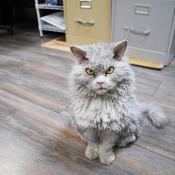 Albert, ο γάτος που μοιάζει να θέλει να δολοφονήσει τους πάντες (20)