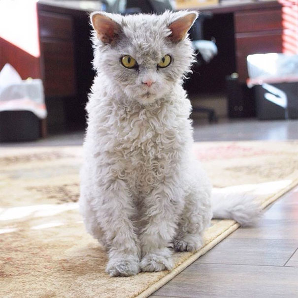 Albert, ο γάτος που μοιάζει να θέλει να δολοφονήσει τους πάντες (21)
