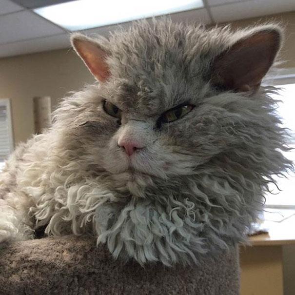 Albert, ο γάτος που μοιάζει να θέλει να δολοφονήσει τους πάντες (22)