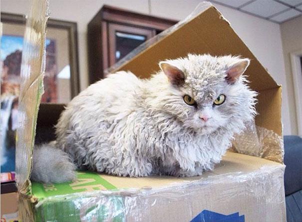 Albert, ο γάτος που μοιάζει να θέλει να δολοφονήσει τους πάντες (24)