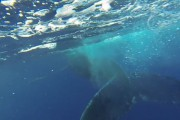 Απρόσμενη συνάντηση με μια φάλαινα