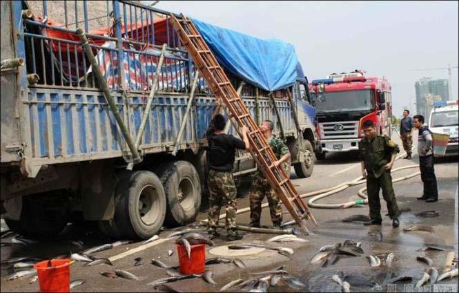 Αυτοκινητόδρομος γέμισε ψάρια (2)