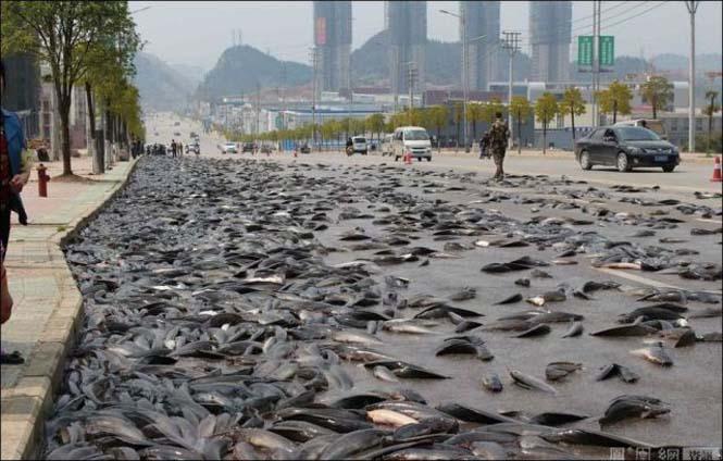 Αυτοκινητόδρομος γέμισε ψάρια (3)