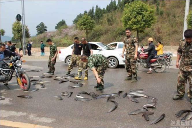 Αυτοκινητόδρομος γέμισε ψάρια (4)