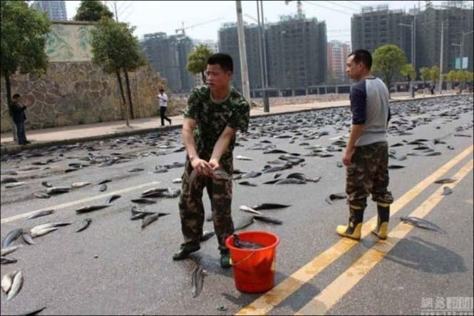 Αυτοκινητόδρομος γέμισε ψάρια (5)
