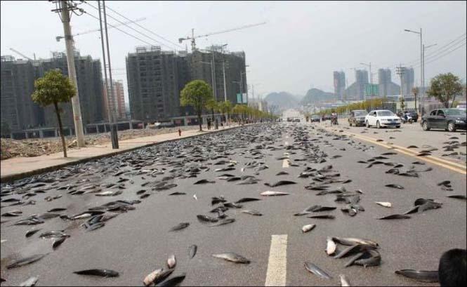 Αυτοκινητόδρομος γέμισε ψάρια (6)