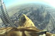 Το Dubai από την οπτική ενός αετού που απογειώνεται από το ψηλότερο κτήριο στον κόσμο