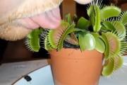 Είχε την τραγική ιδέα να βάλει την γλώσσα του σε ένα σαρκοφάγο φυτό