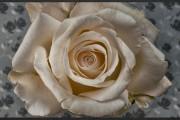 Εκπληκτικό timelapse video δείχνει 21 λουλούδια που ανθίζουν