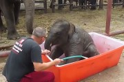 Ελεφαντάκι κάνει μπάνιο