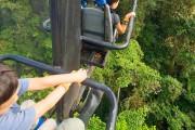 Εναέριο ποδήλατο προσφέρει μαγευτική περιήγηση μέσα στο δάσος (1)