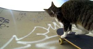 Η γάτα που κάνει skateboard (Video)