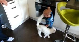 Γάτα προστατεύει αγοράκι από φούρνο που καίει (Video)