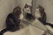 Γάτες και καθρέφτες