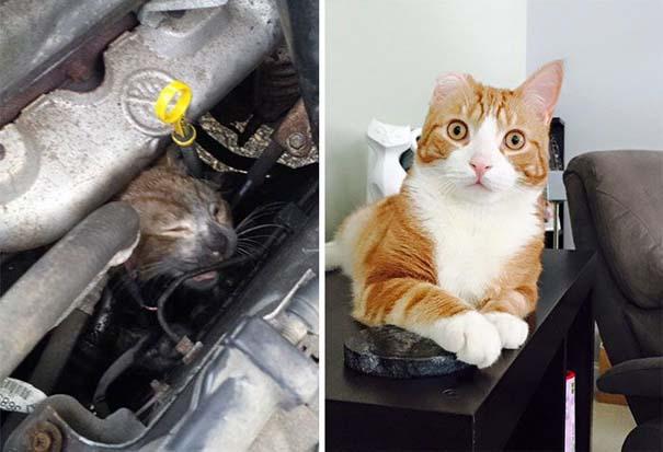 Γάτες πριν και μετά τη διάσωση τους (1)