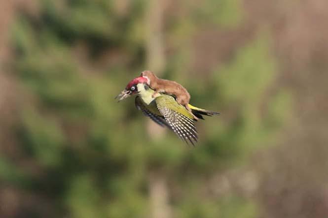 Η πιο θεότρελη πτήση πουλιού που έχετε δει ποτέ (1)