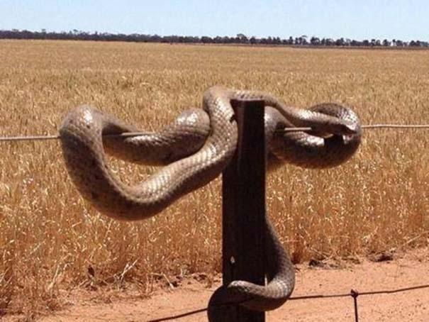 Μόνο στην Αυστραλία #9 (14)