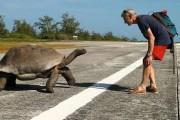 Όταν διακόπτεις μια χελώνα την ώρα που ζευγαρώνει