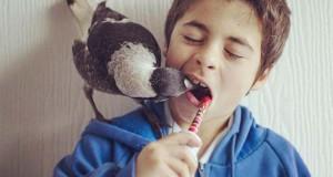 Penguin: Το πιο δημοφιλές πτηνό στο Instagram