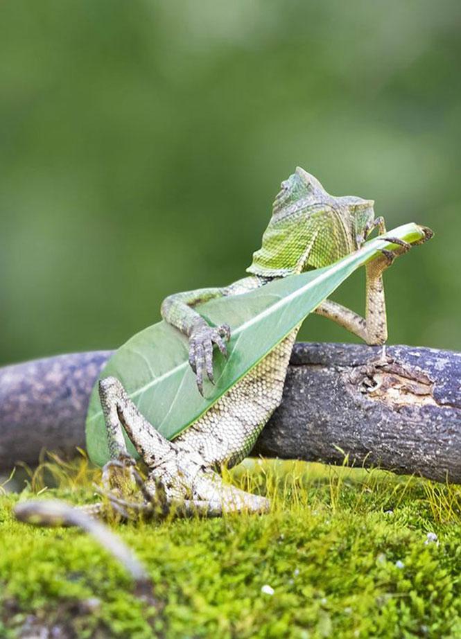 Η σαύρα που παίζει κιθάρα | Φωτογραφία της ημέρας