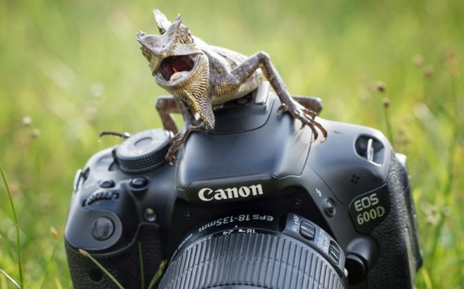 Ο θυμωμένος φωτογράφος | Φωτογραφία της ημέρας