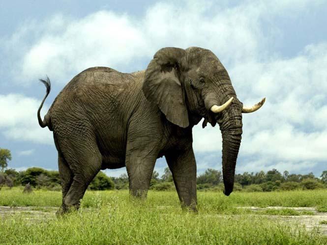 Πόσα χρόνια ζουν τα ζώα (26)