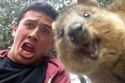 Quokka selfie (1)