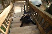 Σκύλοι που δεν υπολόγισαν καλά τα πράγματα (14)