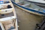 Ταΐζοντας τα πιράνχας σε ένα ποτάμι της Βραζιλίας