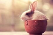 Αξιολάτρευτες φωτογραφίες κουνελιών (1)