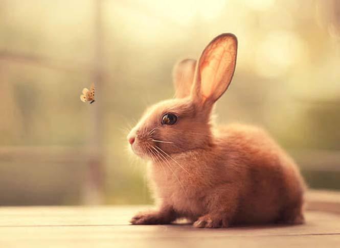 Cute White Rabbit Wallpapers For Desktop: 20 αξιολάτρευτες φωτογραφίες κουνελιών