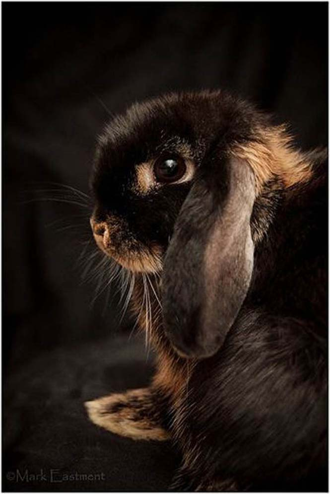Αξιολάτρευτες φωτογραφίες κουνελιών (9)