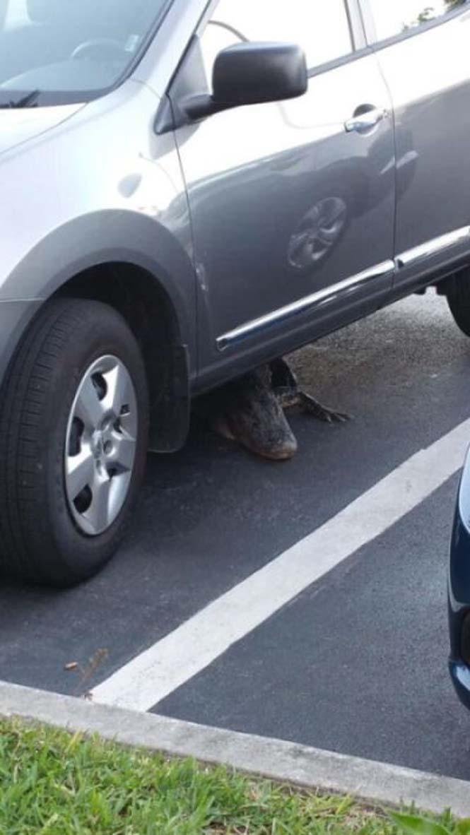 Αν δεις κάτι τέτοιο κάτω από το αυτοκίνητο σου, καλύτερα πάρε το λεωφορείο (2)