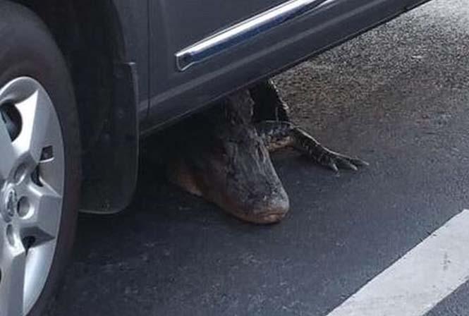 Αν δεις κάτι τέτοιο κάτω από το αυτοκίνητο σου, καλύτερα πάρε το λεωφορείο (3)
