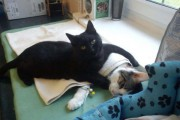 Η απίθανη γάτα νοσοκόμος (1)