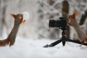 Αστεία ζώα που θέλουν να γίνουν φωτογράφοι (11)