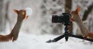 22 αστεία ζώα που θέλουν να γίνουν φωτογράφοι