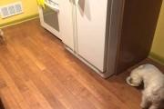 Αυτός ο σκύλος δεν θέλει να τρώει μόνος του