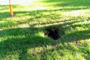 Δεν μπορείτε να μαντέψετε τι κάθεται μέσα σε αυτή την τρύπα (1)