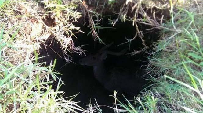 Δεν μπορείτε να μαντέψετε τι κάθεται μέσα σε αυτή την τρύπα (2)