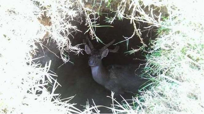 Δεν μπορείτε να μαντέψετε τι κάθεται μέσα σε αυτή την τρύπα (3)