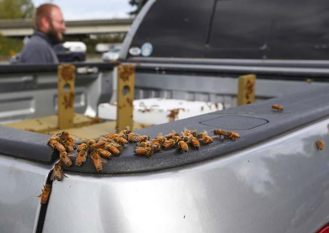 Εκατομμύρια μέλισσες απελευθερώθηκαν μετά από τροχαίο (3)