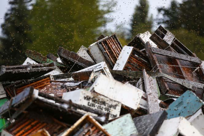 Εκατομμύρια μέλισσες απελευθερώθηκαν μετά από τροχαίο (4)