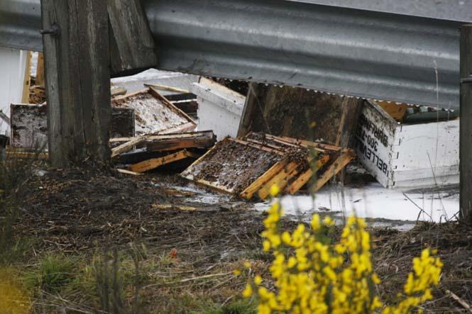 Εκατομμύρια μέλισσες απελευθερώθηκαν μετά από τροχαίο (7)