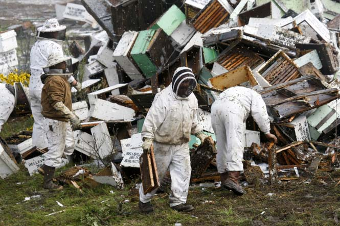 Εκατομμύρια μέλισσες απελευθερώθηκαν μετά από τροχαίο (9)
